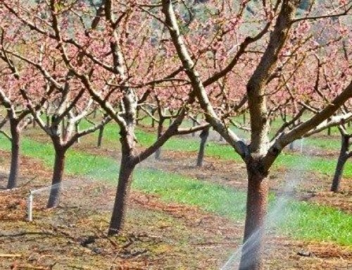 Micro Ag Irrigation Systems Meet Orchard Watering Needs!